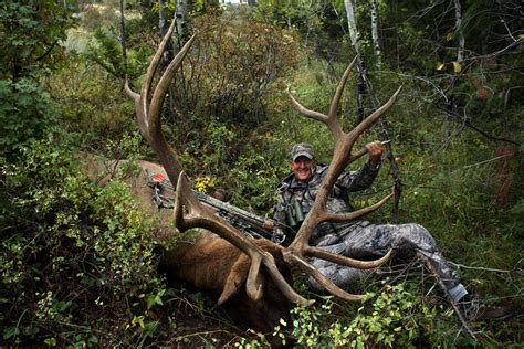 Records Colorado World Record Bull Elk Colorado Newhairstylesformen2014