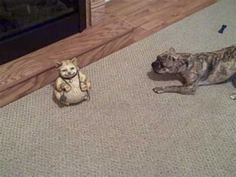 do pugs like cats roxie hart my bugg puppy boston terrier pug mix really does not like this cat statue