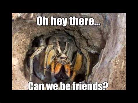Memes About Spiders - 23 funny spider memes weneedfun