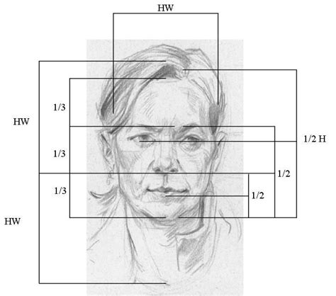 drawing with measurements 25 best ideas about proportions on draw faces drawing tutorials and