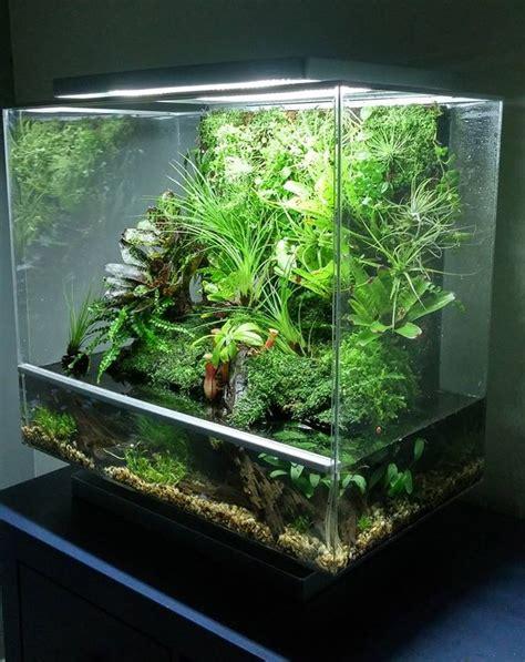 127 best vivarium place of images on plants terrarium ideas and terrariums