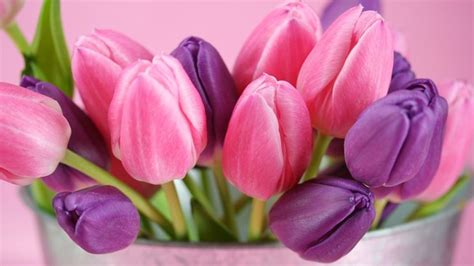 nomi fiori viola fiori viola nomi significato fiori nomi dei fiori viola