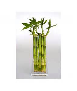 bamboo shoots with vase