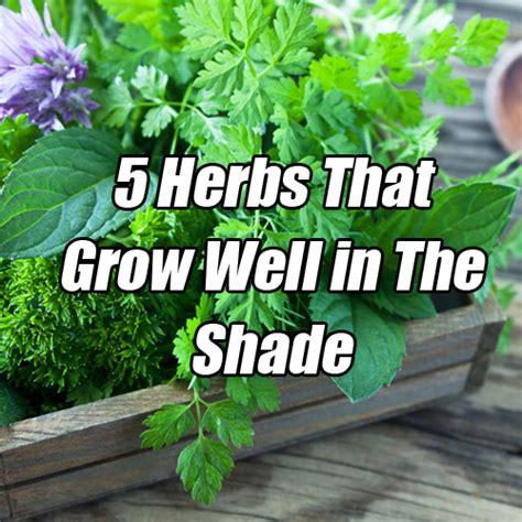 herbs  grow    shade info