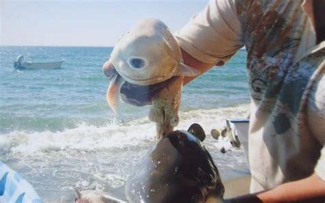 baby shark eyes 实拍罕见的独眼畸形鲨鱼胎儿 组图 搜狐滚动