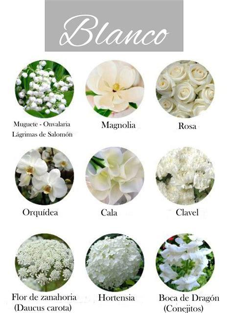 imagenes de flores naturales con sus nombres las 25 mejores ideas sobre nombres de flores blancas en
