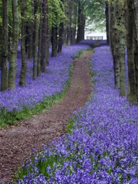 654 cherry tree road bluebell woodlands hertfordshire by david clapp