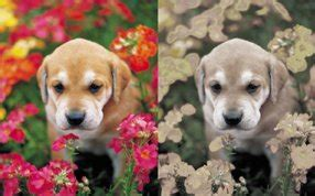 how do dogs see the world vision what colors can dogs see and can they see in the