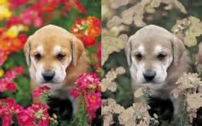 In Humans Red Green Color Blindness Is Dog Vision What Colors Can Dogs See And Can They See In