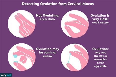 check  cervical mucus  detect ovulation