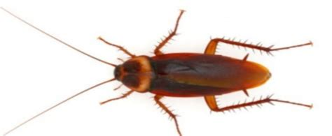 how much does an exterminator cost for bed bugs how much does cockroach extermination cost