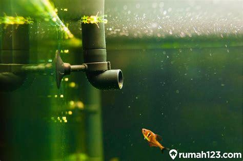 jenis filter aquarium  cocok  aquascape pemula
