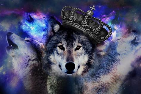 wolf backgrounds   stunning backgrounds
