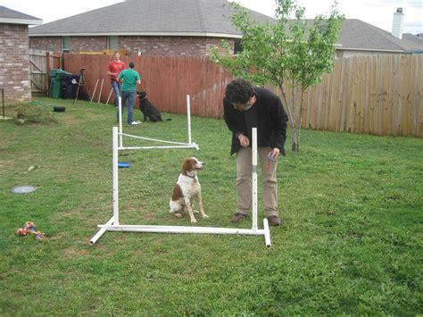 backyard dog agility course 100 backyard dog agility course chicken completes agility course jukin media