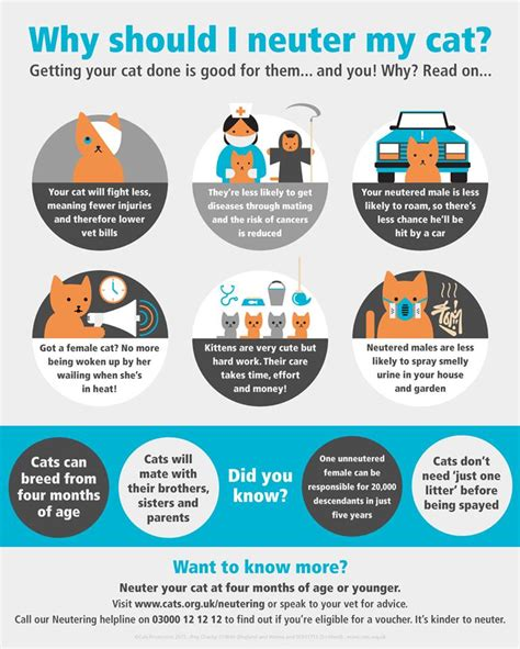 how much to get a spayed cats protection thanet
