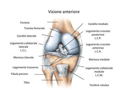 dolore interno al ginocchio il ginocchio fisiokinetica centro di riabilitazione