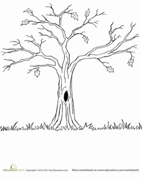 spooky tree coloring page bare tree worksheet education com