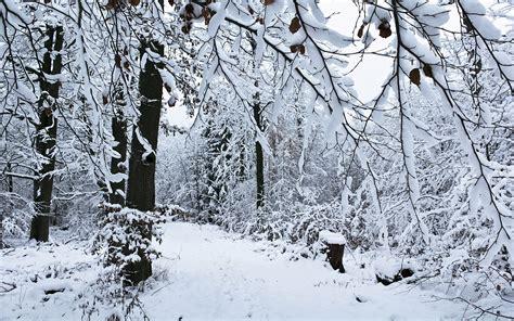 imagenes naturaleza invierno fondos de pantalla estaciones del a 241 o invierno nieve
