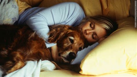 sleeping with dogs a dilemma sleep with your pet risk catching his bugs the chart cnn blogs