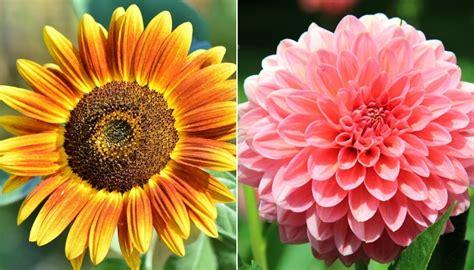 fiori foto e nomi ecco il significato e da cosa derivano i nomi di 10 fiori