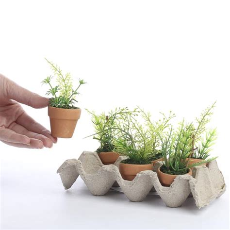 tiny potted plants small potted plants gardening guide