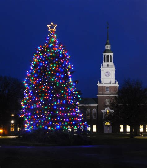 gallery of hanover christmas trees perfect homes