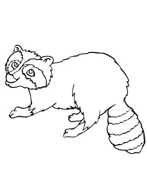 baby raccoon coloring pages free printable raccoon coloring pages for kids