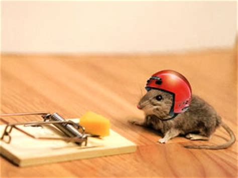 How To Get Rid Of Field Mice In Garage by How To Get Rid Of Mice 7 Ways To Oust Impudent Rodents