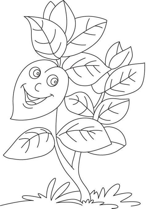 plants coloring pages preschool plant coloring coloring home