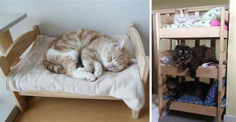 cat owners  japan turn ikea doll beds  adorable cat beds
