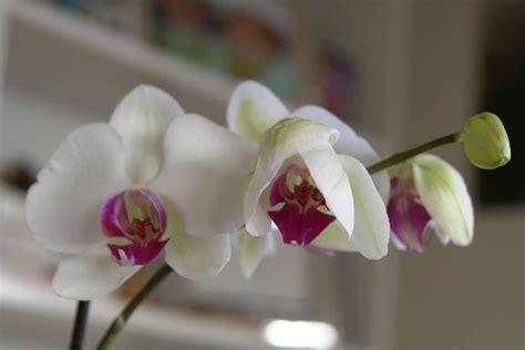 fiore di orchidea orchidea fiori fiori di piante fiori orchidea