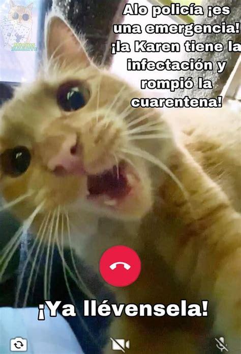 karen  el gato la cuarentena memes en espanol la mejor