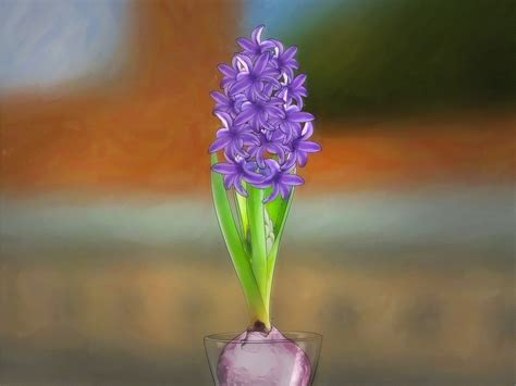 how to in water how to grow a hyacinth in water 9 steps with pictures