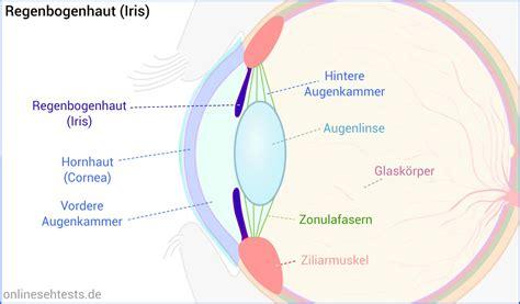 Beschriftung Des Auges by Aufbau Und Funktion Des Menschlichen Auges