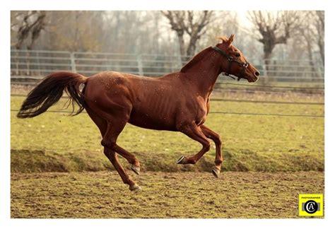 dati galoppo fotografia naturalistica cavallo in tempo di sospensione