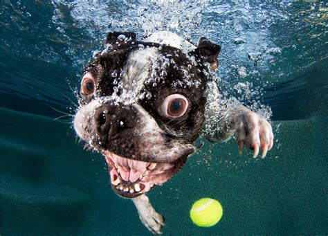 puppies underwater underwater dogs prepare for cuteness cube breaker