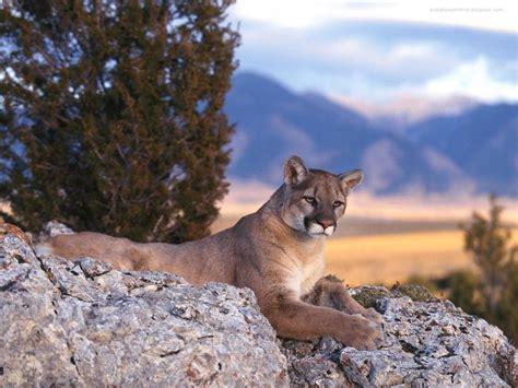 animaux sauvageswallpapers  fonds decran gratuits