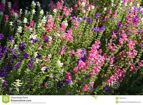 List Of Garden Flowers With Pictures Country Garden Flowers Stock Image Image Of Growth 15041627