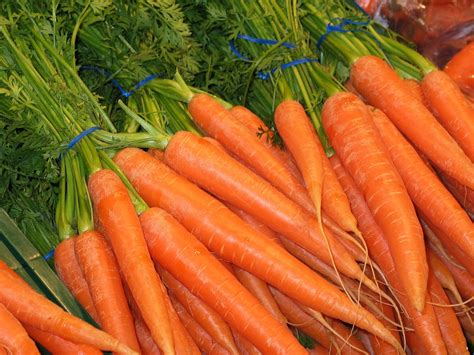 pictures of carrots free photo carrots federal carrots food free image on