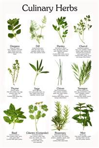 Carole s chatter here are the common culinary herbs