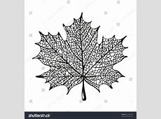 Maple Leaf Drawing Stock Vector 133242428 - Shutterstock Free Clip Art Maple Leaf