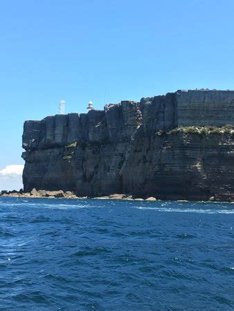 boat tour jervis bay jervis bay eco adventures day boat tours huskisson 2018