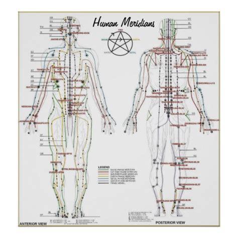 pressure point diagram human meridians pressure point chart poster zazzle