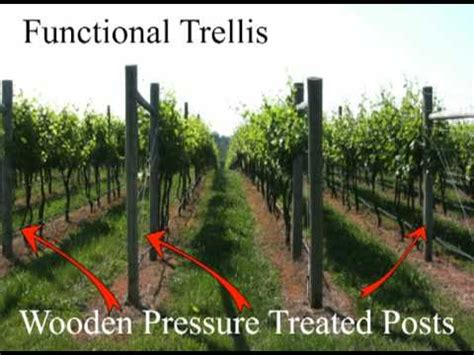 How To Build An Arbor Trellis by Grape Trellis Systems Youtube
