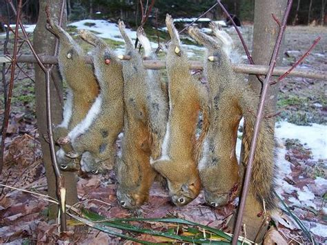 squirrel pole huntingnet com forums