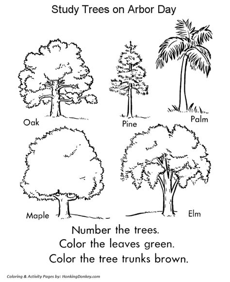 leaf identification coloring pages arbor day coloring pages tree identification stuff for