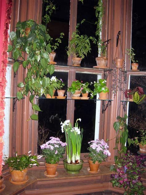 colorful plants  autumn windows
