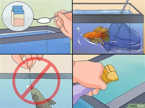 6 Makanan Ikan Cupang 6 cara untuk menyelamatkan ikan cupang yang sekarat wikihow