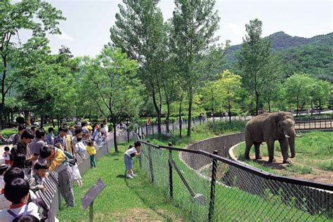theme park zoo zoo korea grim s diary travel adventures in korea nature escape
