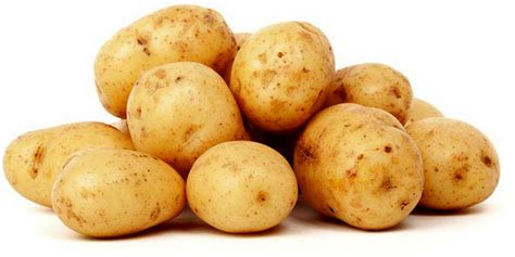 Genetika Tumbuhan L V Crowder rizki morfologi dan syarat tumbuh tanaman kentang